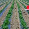 Schwachpunkt-Landwirtschaft